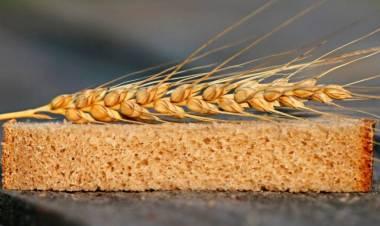 Carlos Manessi y el trigo transgénico