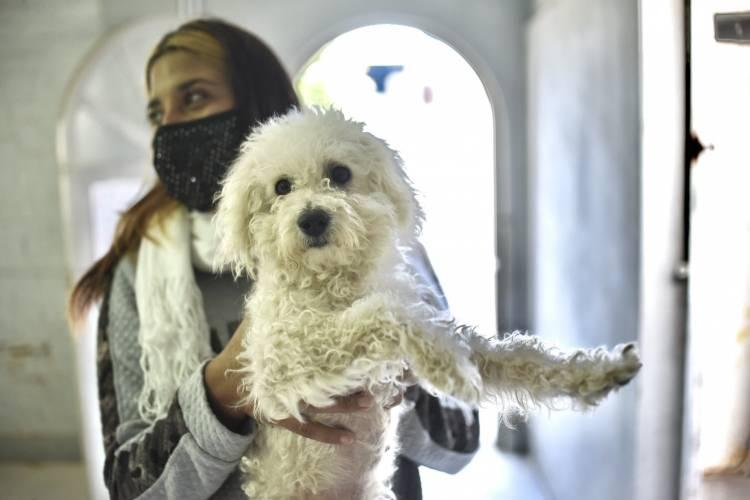 Salud animal: el municipio realizó cerca de 7 mil castraciones en tres meses